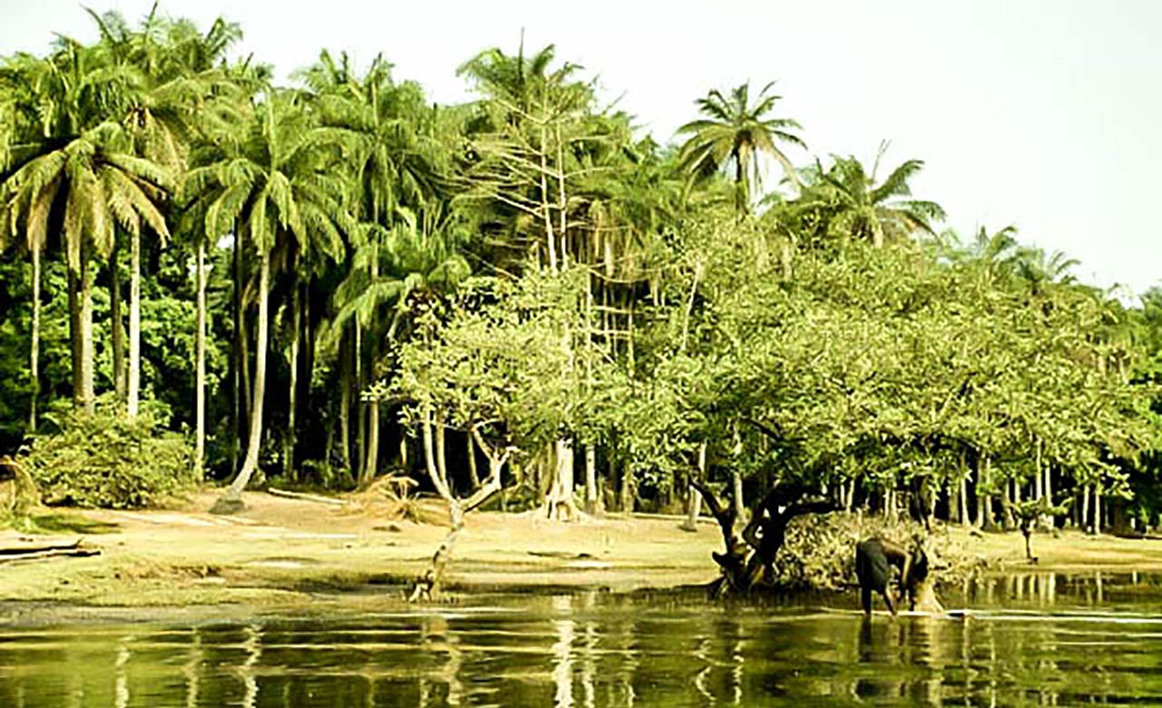 La zone soudano-guinéenne