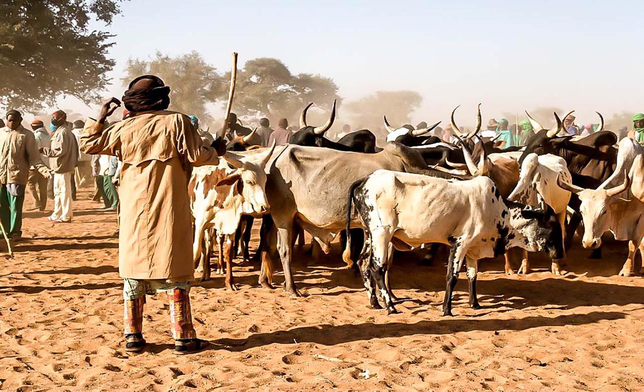 Marché de bétail de Djibo_