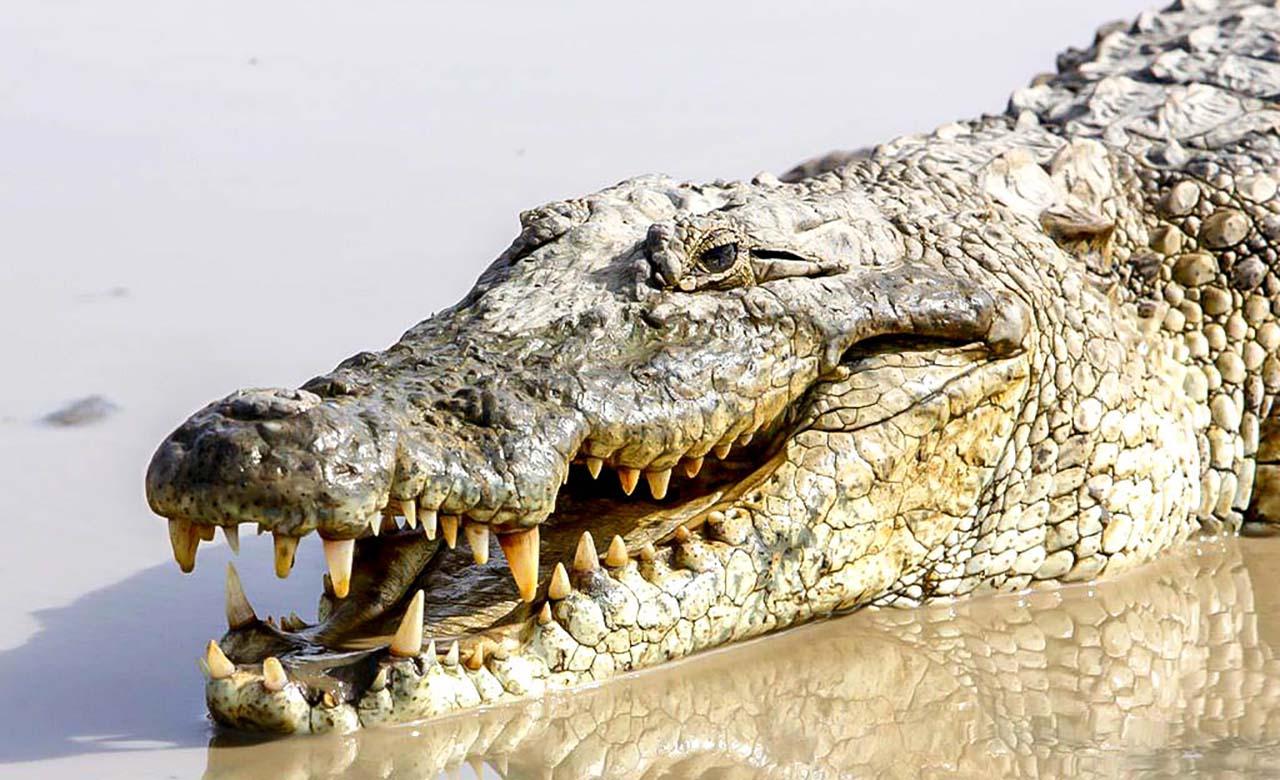 Mare aux crocodiles sacrés