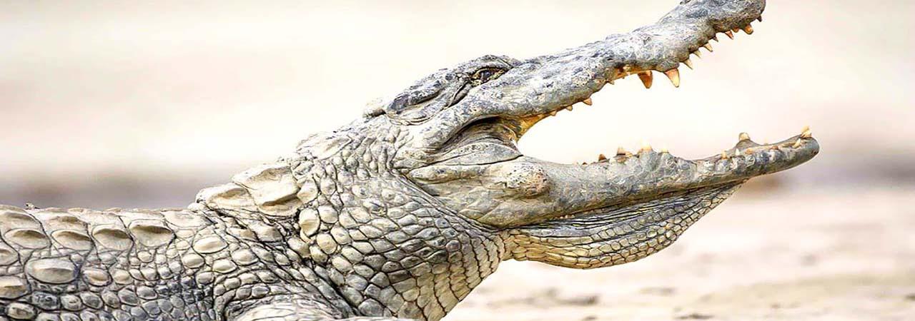 Mare aux crocodiles sacrés_