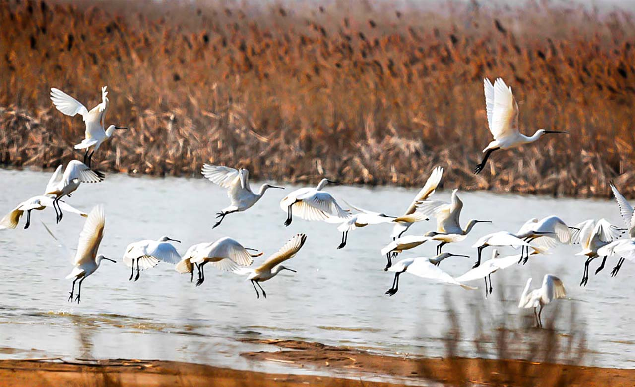 Mare ornithologique