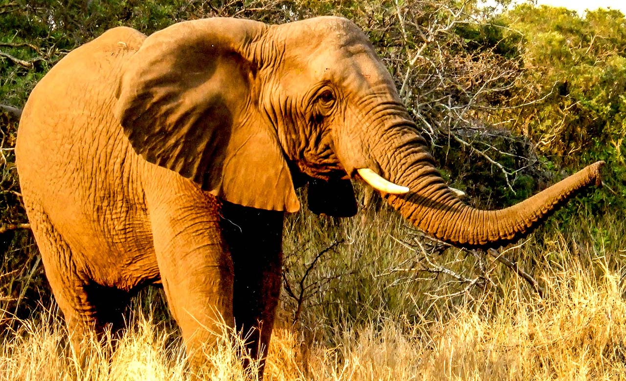 Elephant du parc